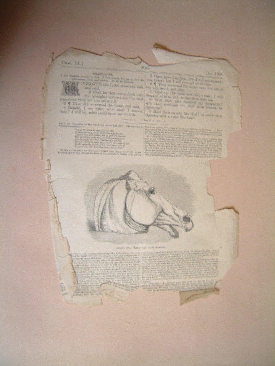 horses_head_page