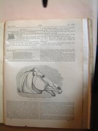 horses_head_page2