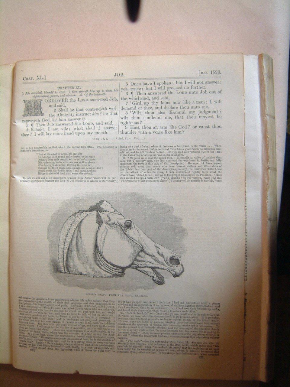 horses_head_page2