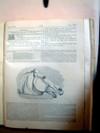 Horses_head_2